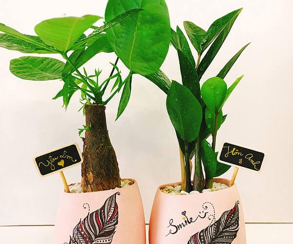 Cây Kim Ngân là loại cây phong thủy giúp gia chủ phát tài