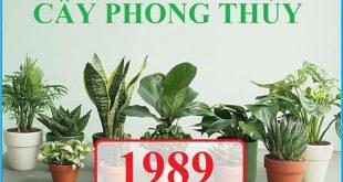 TOP 10 cây hợp tuổi Kỷ Tỵ 1989 thuộc Thủy và Hỏa điển hình nhất