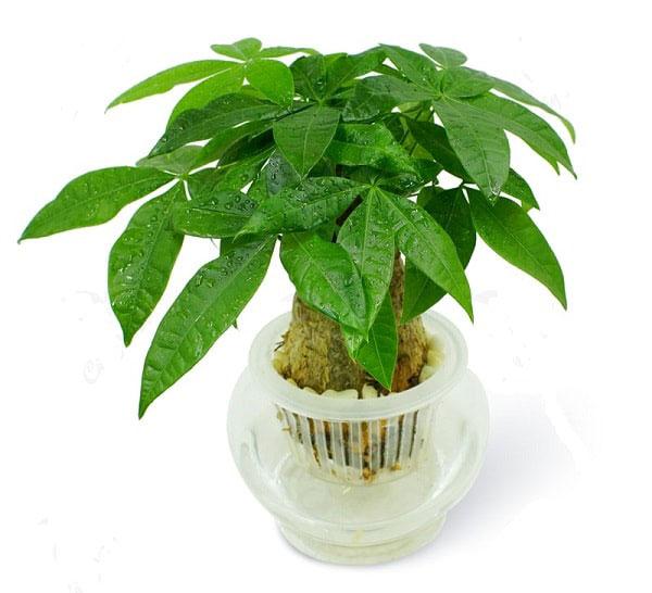 Tuổi Nhâm Tuất nên trồng cây gì nhất trong năm 2019?