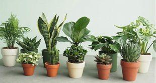 Tuổi Giáp Tuất 1994 nên trồng cây phong thủy gì để mang lại hạnh phúc tròn đầy