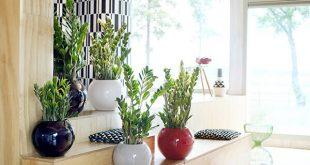 Tuổi Tý nên trồng cây gì trong nhà để tài vận hanh thông?