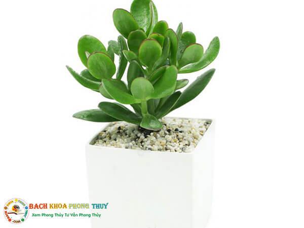 Tuổi Quý Sửu mạng mệnh Mộc nên những loại cây có màu xanh