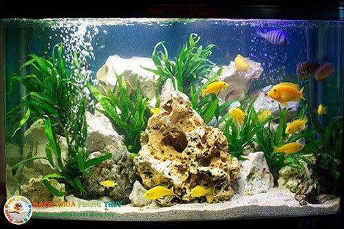 Cách bố trí bể cá trong nhà cho phong thủy