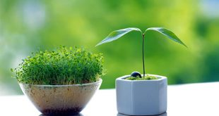 Tuổi Đinh Sửu hợp cây gì nhất để kích tài lộc trong năm 2019?