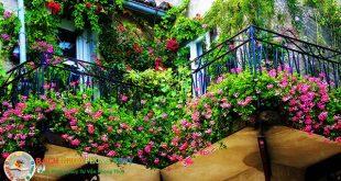 Có nên trồng cây dây leo trước nhà không