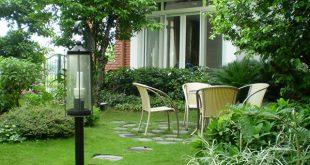 Trồng cây vối trước nhà và những điểm cần lưu ý khi trồng