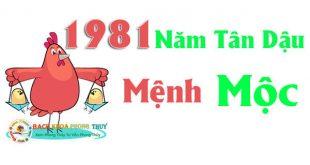 Sinh năm 1981 mệnh gì, thuộc tuổi gì?