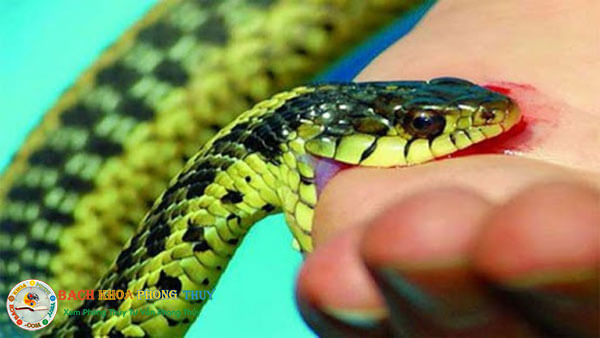 Giải mã giấc mơ thấy rắn theo màu sắc