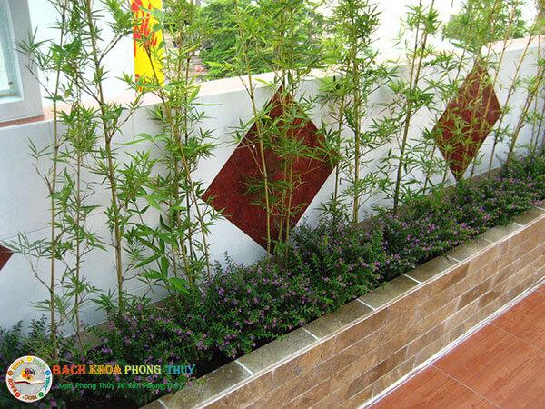 Những loại cây trồng trước nhà nên chọn