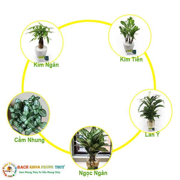 Mệnh Kim hợp với cây gì để bàn làm việc, trồng trong phòng, trong nhà?