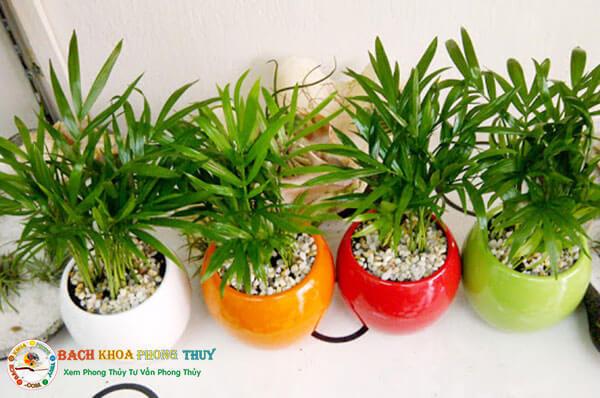 Mệnh mộc hợp cây gì để bàn làm việc, trồng trong nhà?
