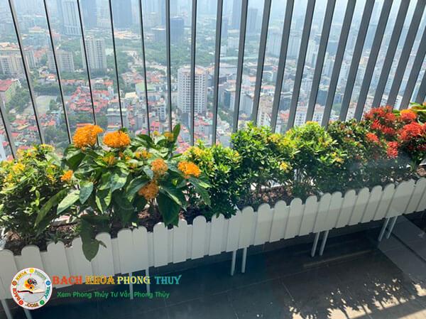 Nên trồng hoa gì ở ban công trên sân thượng?
