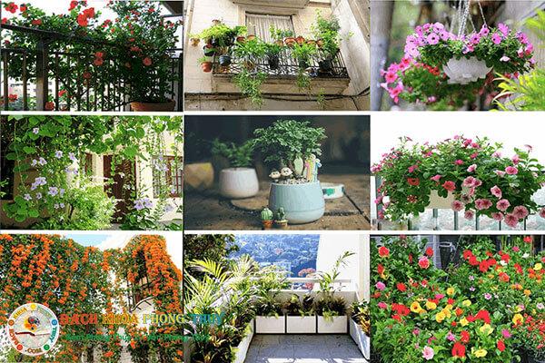 Những loại hoa gì dễ trồng, nở quanh năm?