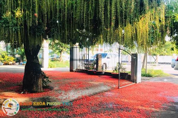 Ở khía cạnh phong thủy, trồng cây Lộc Vừng trước nhà có tốt không?