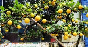 Nên trồng cây ăn quả gì trước nhà?