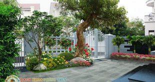 Trồng cây bóng mát trước nhà và những tiêu chí lựa chọn